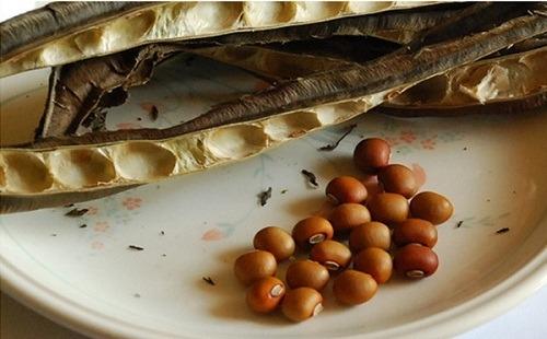hạt đậu rồng rang trị đau dạ dày