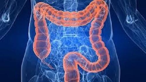 chiều dài đường ruột ở người