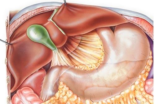 Những điều bạn nên biết về bệnh trào ngược dịch mật